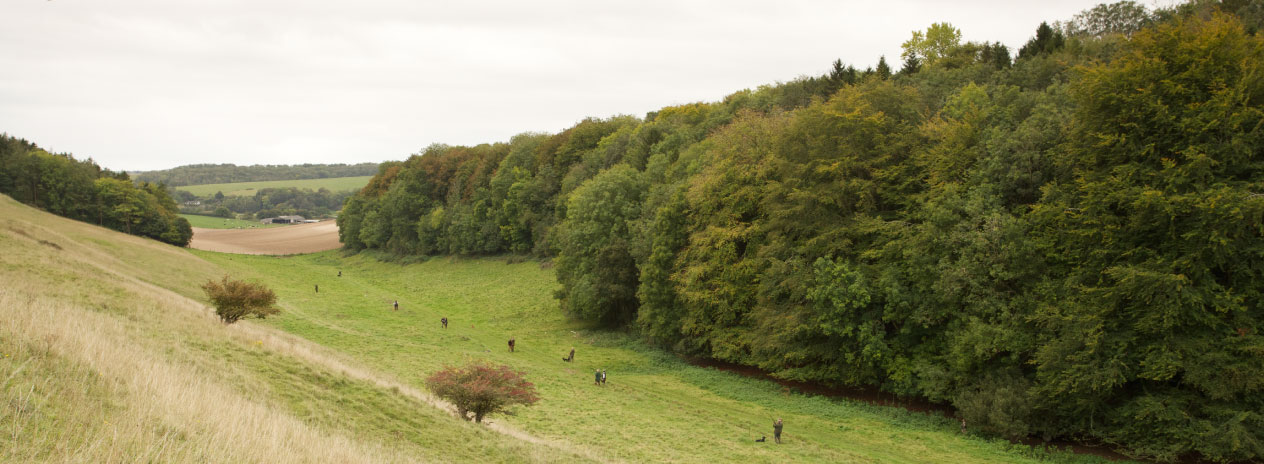Partridge and pheasant shooting at Wrackleford